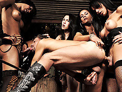 The Mistresses of Pain are playing with a slave today. They bend him over and shove their cocks deep into his hungry mouth and ass. They make him stroke his cock and cum a load while they all shoot lo from Shemale Punishers