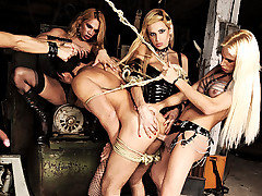 Mistresses Dany, Jaqueline, Leticia, and Samantha have a slave for the day that they plan on using him until he begs them to stop.  They start out slow with a nice ass beating before swarming over him from Shemale Punishers
